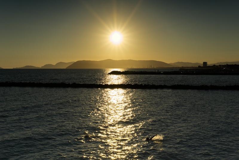 Swim in the sunset... di Alex83