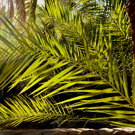 Palm Leaves by Nadeem M Siddiqui - Nature Up Close Leaves & Grasses