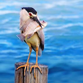Enjoy eating by Sasi- Smit - Animals Birds
