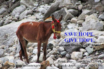 Photo: This horse has spent his entire life ferrying pilgrims to and from Kedarnath Dham. And since December 16 -- when the first rush of water brought with it untold devastation for the region -- this horse has been stuck on a rocky bed across river Mandakini, without a blade of grass to graze on. We shall call him Hope: http://iexp.in/oaY25549 http://www.youtube.com/watch?v=6L-mA6pLJSE