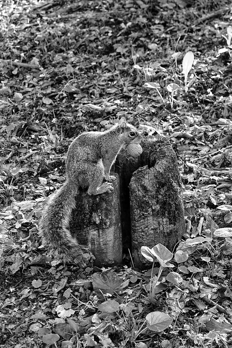 Lo scoiattolo di Dayana