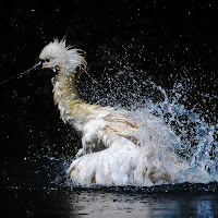 Un bagno veloce di