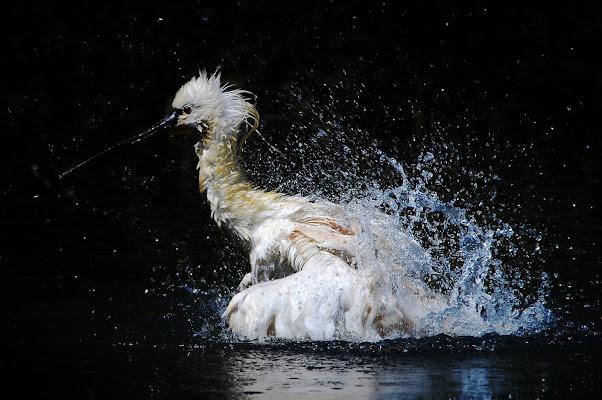 Un bagno veloce di BastetC