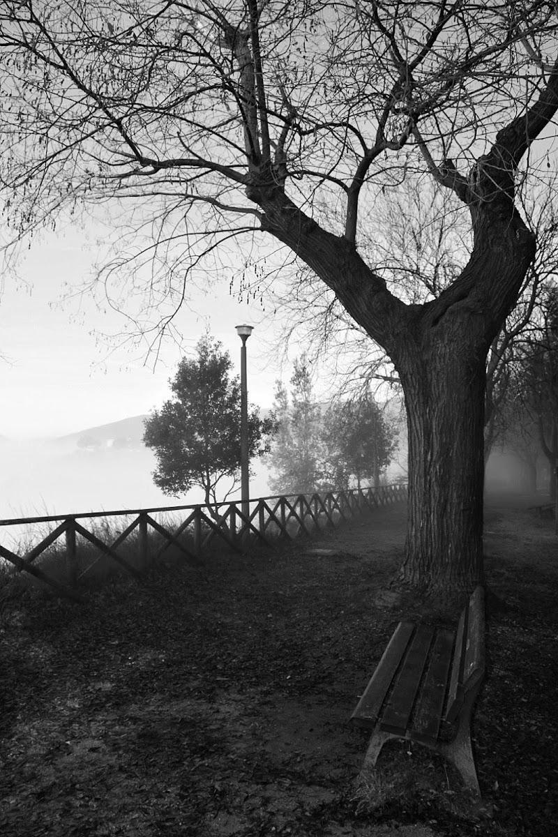 oltre la nebbia  di Paola Pulieri