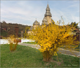 Photo: Turda - Str. Salinelor - spatiu verde , ploaia de aur - 2019.04.05