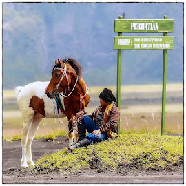 rent horse_bromo  by JOe Arian - Instagram & Mobile Other (  )
