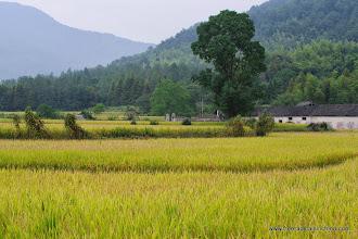 Photo: Rice harvest!