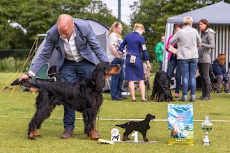 Photo: Puppyklas reuen / Puppy class dogs - Vangelis Spansett Black Ivy