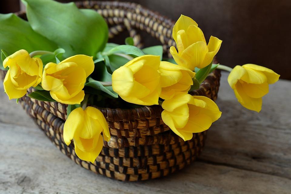 ¿Cuáles son las flores que simbolizan amistad?