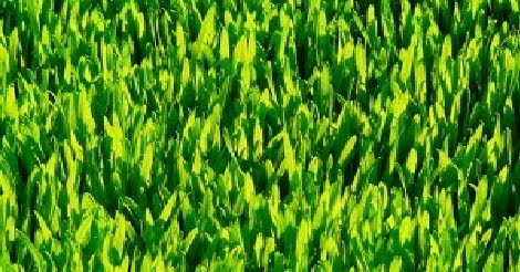 Top 5 Reasons To Add Wheatgrass To Your Daily Diet