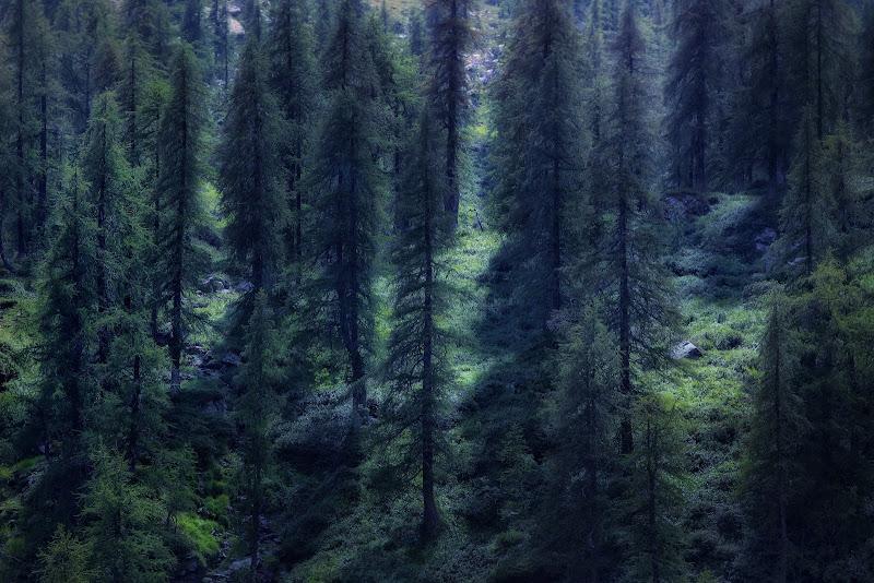 Green forest di Zafs_77