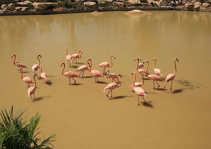 Vinpearl-Land-Nha-Trang-flamingos