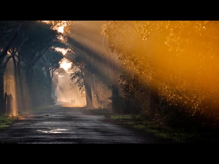 Passeggiata Mattutina di Davide Vitali