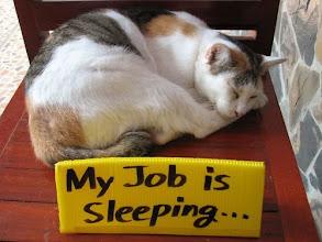 Photo: my job is sleeping