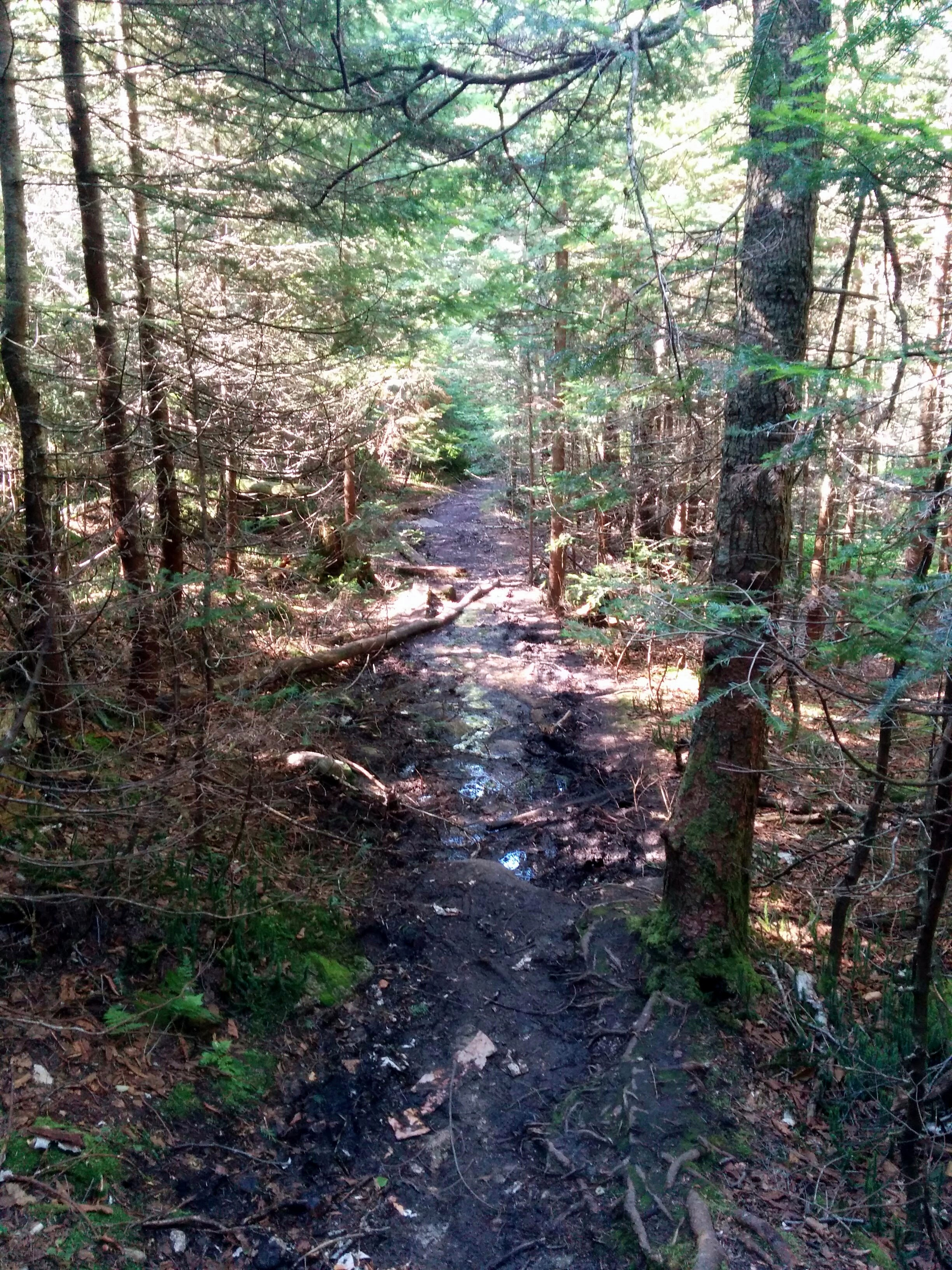 Photo: The trail gets mucky