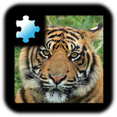 Jigsaw Puzzle: Tiger