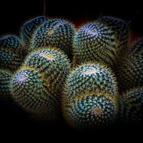 Cactus by Sharon Leckbee - Nature Up Close Other plants ( plants )