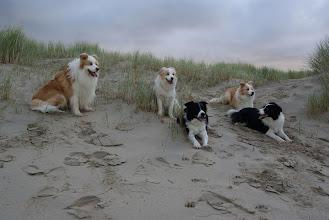 Photo: Ganim, Indy, Fraya, Hestia en Nessa