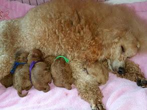Photo: Mama Honey nach der Geburt mit ihren Fünflingen!