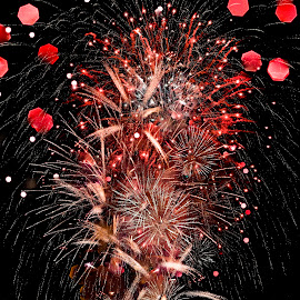 Firework bloom! by George Lim - Abstract Fire & Fireworks ( firewor, night flower, flame flower, fireworks, bloom )
