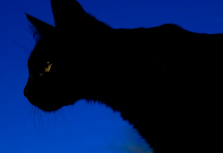 Photo: el Muxu en els seus inicis com a depredador