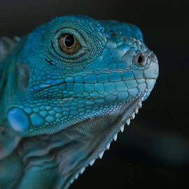 Exist when camera on by May May - Animals Amphibians ( blue, amphibian, wildlife, reptile, animal,  )