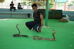 Visiter La ferme aux serpents