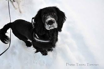 Photo: Jallu ja luminen kuono