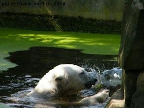 Photo: Planschen im Wasser :-)