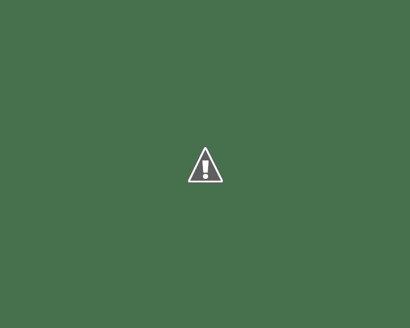 水面の魚に飛びつく尾白ワシ