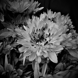 by Mary Gallo - Black & White Flowers & Plants ( nature, single flower, black and white, flower )