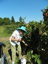 Photo: Karen picking raspberries