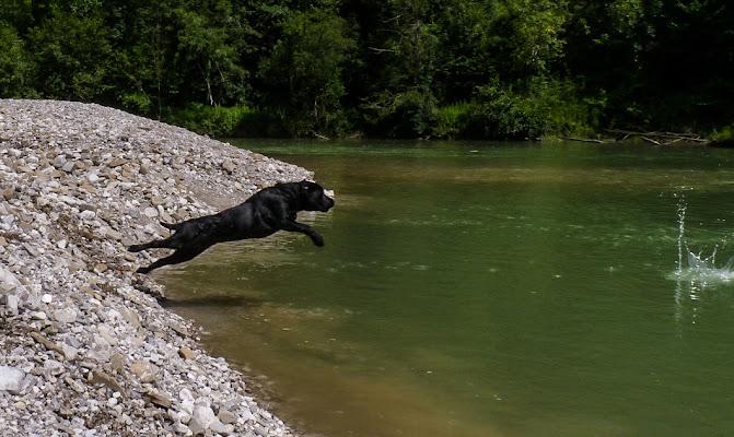 Tuffo da Labrador di StePh
