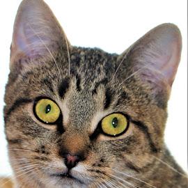 CeCe by Linda    L Tatler - Animals - Cats Kittens