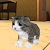 Kitten Cat Simulator 3D Craft file APK for Gaming PC/PS3/PS4 Smart TV