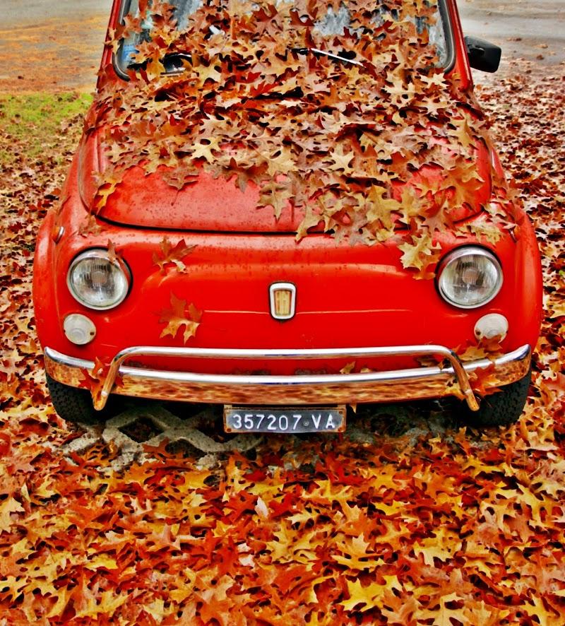 l'autunno ricopre il cinquino di MaxFelice