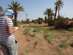 Photo: The local people have also planted corn between the tamarisk