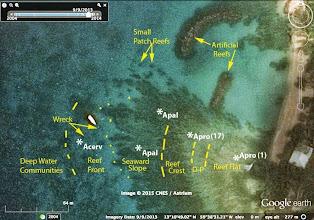 Photo: Map showing the zones and locations of three acroporoid corals. Acerv=Acropora cervicornis; Apal=Acropora palmata; Apro=Acropora prolifera