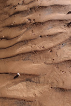 Photo: Critter tracks in mud