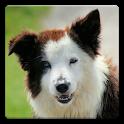 Audio Book Pro - Dog Training icon