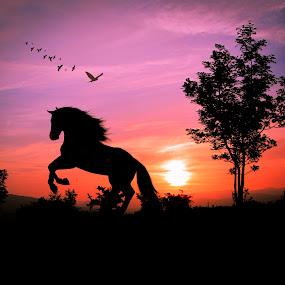 konj htc.jpg