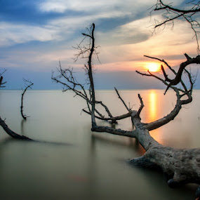 Falling by Azri Suratmin - Travel Locations Landmarks ( wood, sunset, azri, sea, malaysia, azrisuratmin, sun, parit jawa )