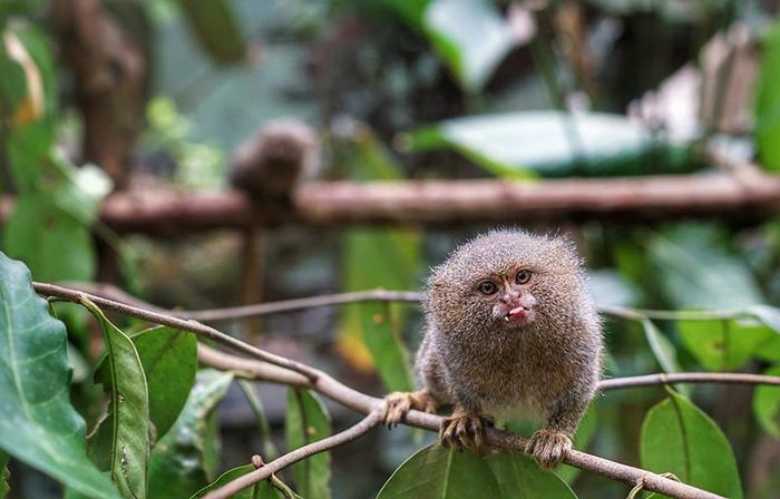 Disfruta el nuevo año rodeado de la selva amazónica