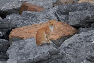 Photo: Jeden z tysięcy turecich kotów