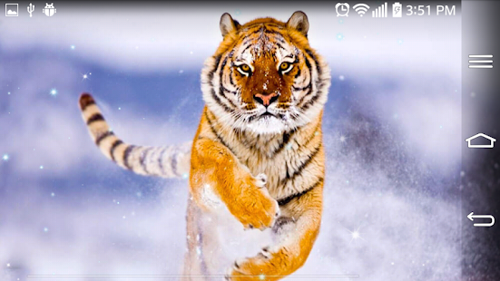 3d Wallpapers For Blackberry Z3 Tiger Live Wallpaper Apk For Blackberry Download Android