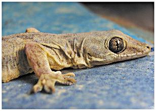 Photo: Eye of Gecko