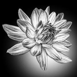 B&W flower 13 by Michael Moore - Black & White Flowers & Plants