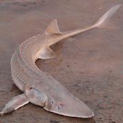 ScaryFish 4 Lite