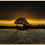 The setting sun by Elaine Delworth - Landscapes Sunsets & Sunrises ( clouds, sky, sunset, trees, fields,  )