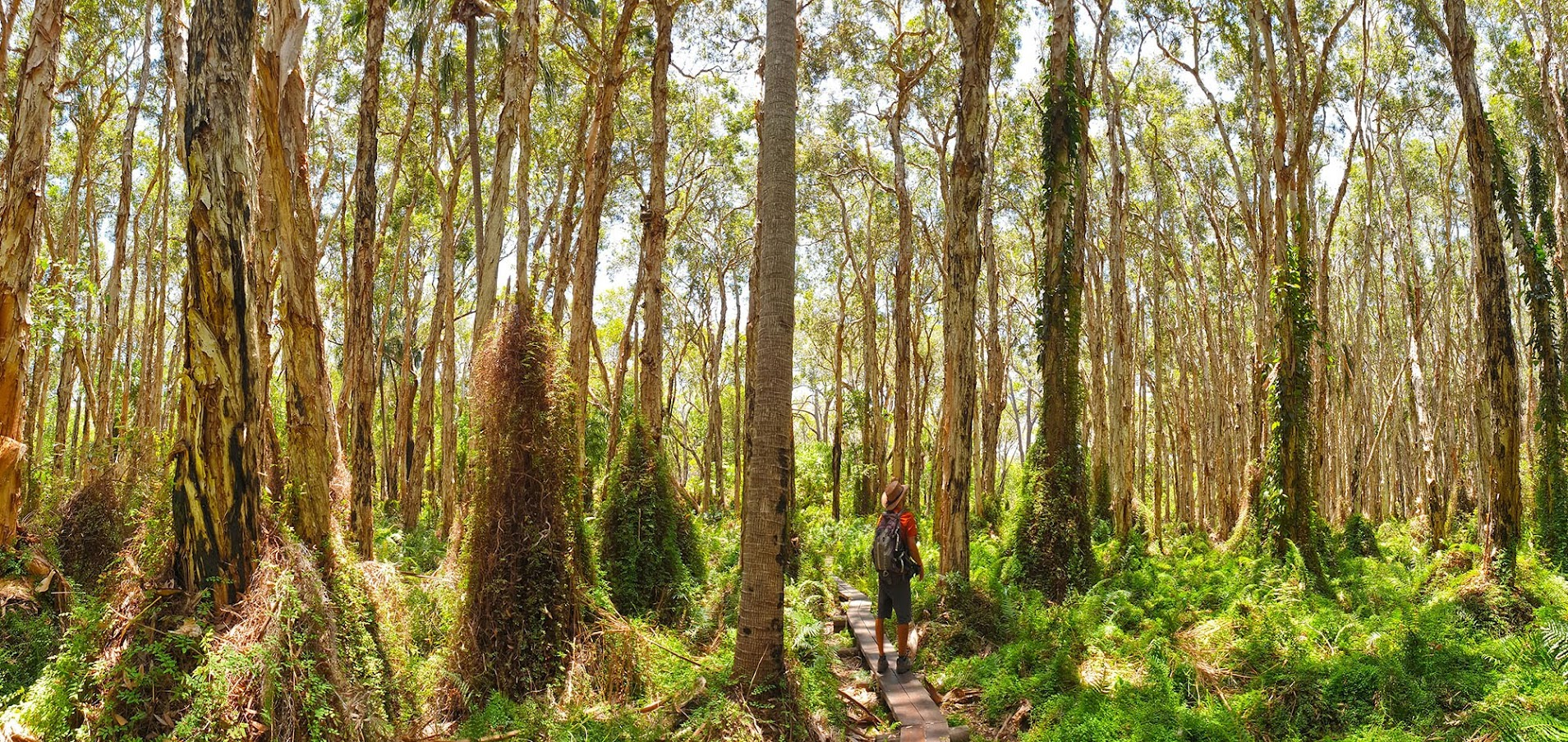 Visitar a GRANDE BARREIRA DE CORAL DA AUSTRÁLIA | Roteiro para viajar pela Costa Leste da Austrália, de Cairns a Brisbane